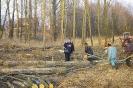 Wycinka drzew_63